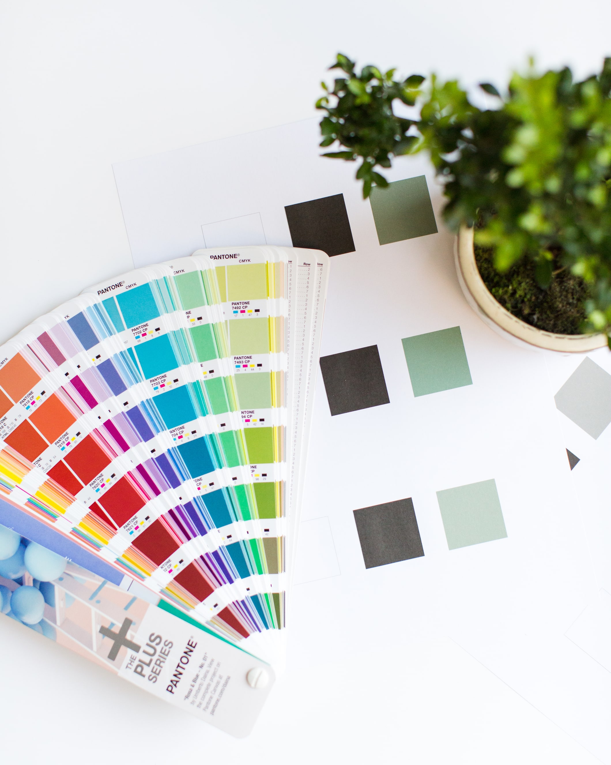 Pantone swatches fan, colour palettes and bonsai tree branding atmosphere