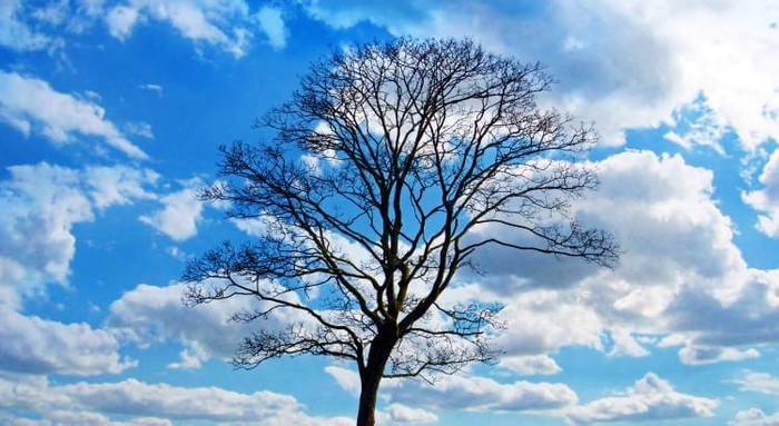 Silhouette of a tree against a blue sky