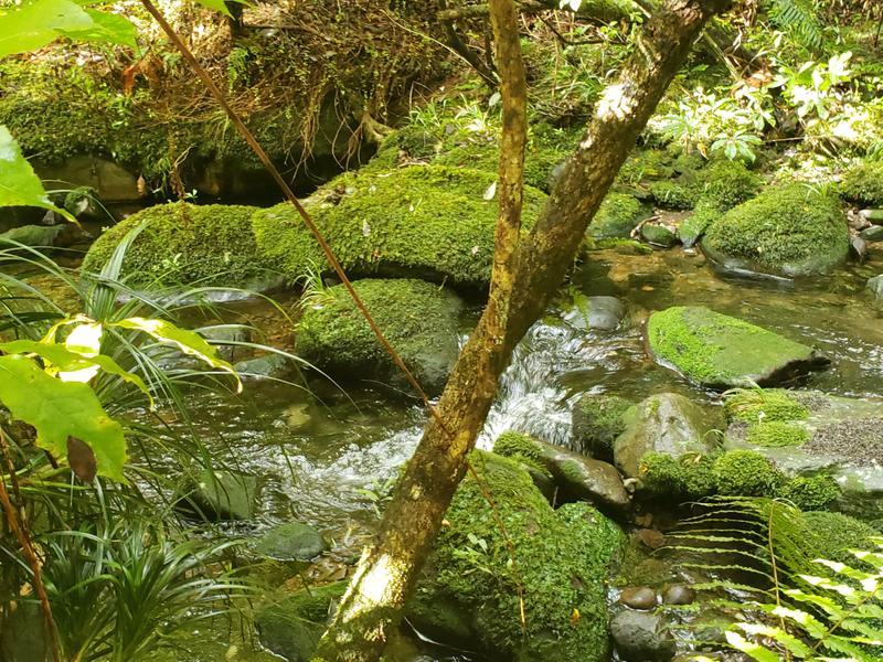 Mossy streams