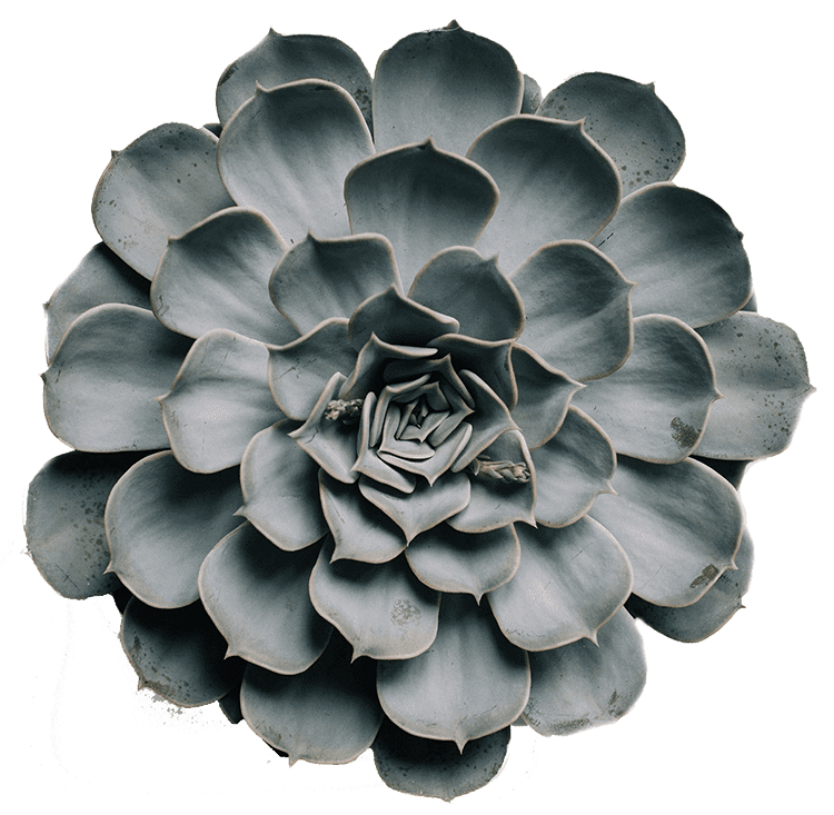 The Airdrie Angel Program - Succulent Plant