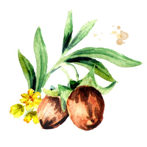 ホホバ種子油(エモリエント)