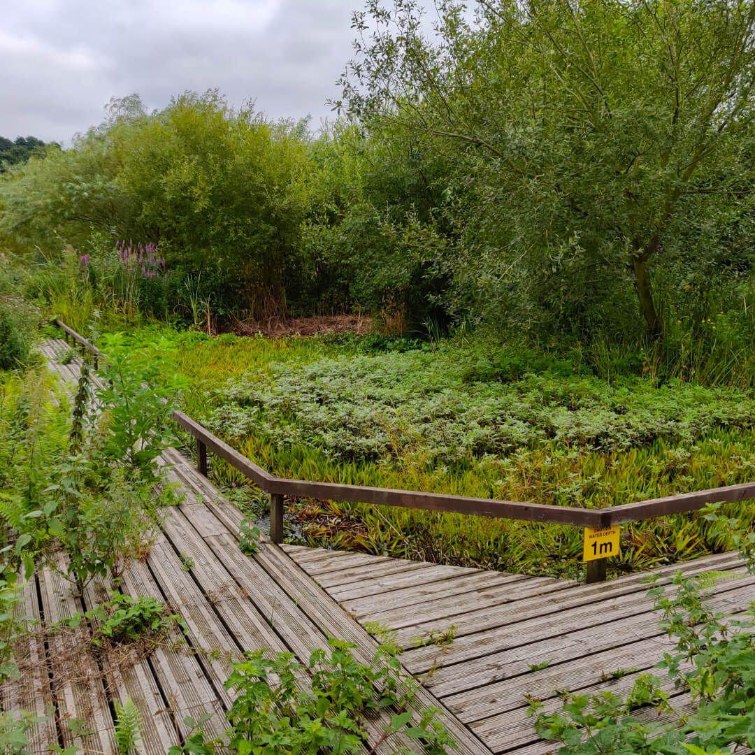 Rodley Nature Reserve pond