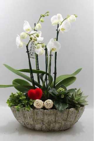 Stenen pot orchideeën