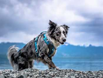 5 Reasons Your Dog Needs a Harness