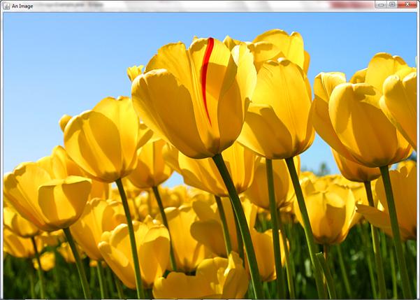 Tulips image