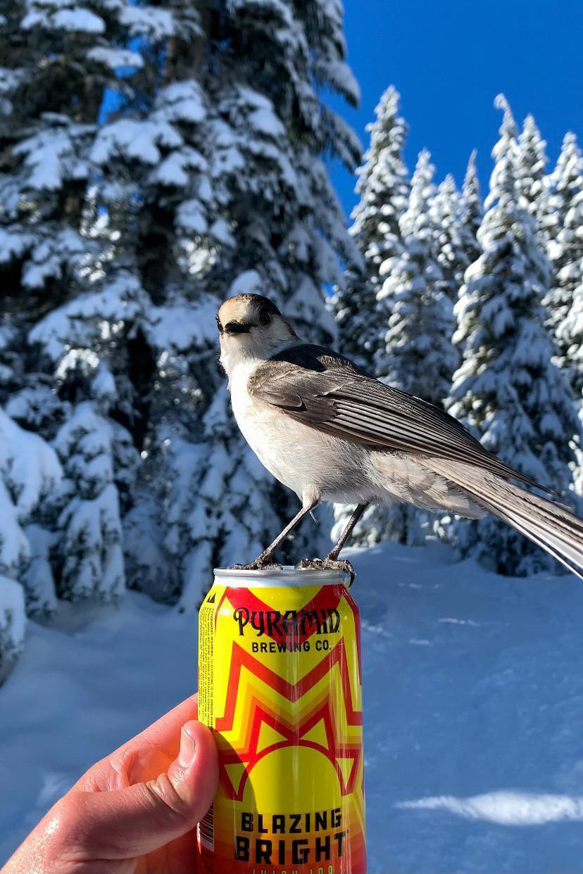 A small bird stands on top of a can Pyramid Blazing Bright IPA. In the background is a snowy forest.