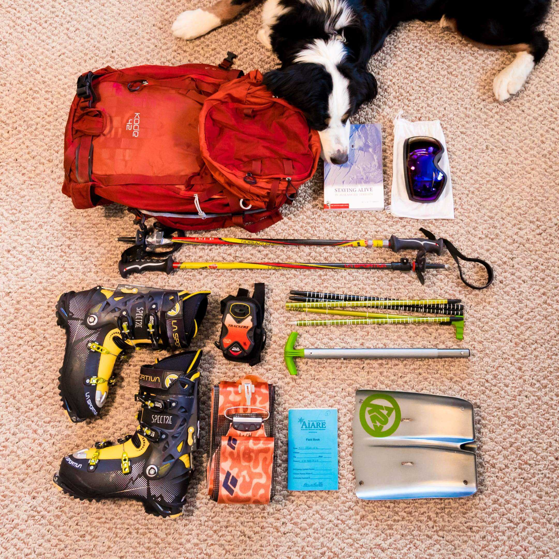 Tips & Tricks for Skiing with Your Dog