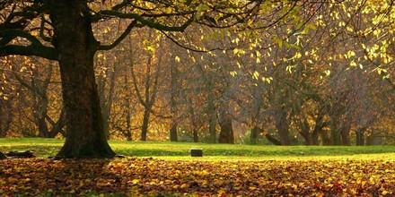 Armley Park in Summer