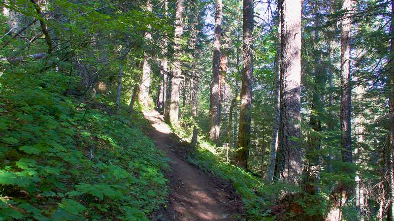 The PCT begins to climb from Rock Creek