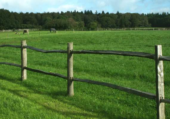 Timber post and rail fence