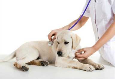 Vaccinations for Your Dog: Where to Begin