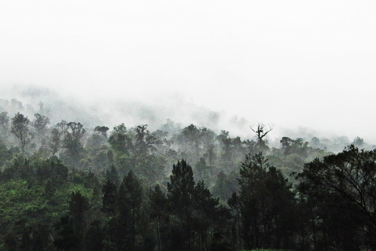 Rainy Forest of cetho