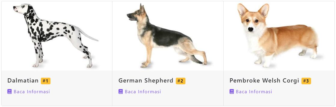 Dog recommendation result