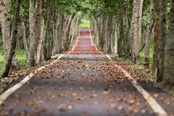Photo of a woodland road