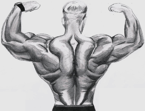 Bodybuilder Back Sketch