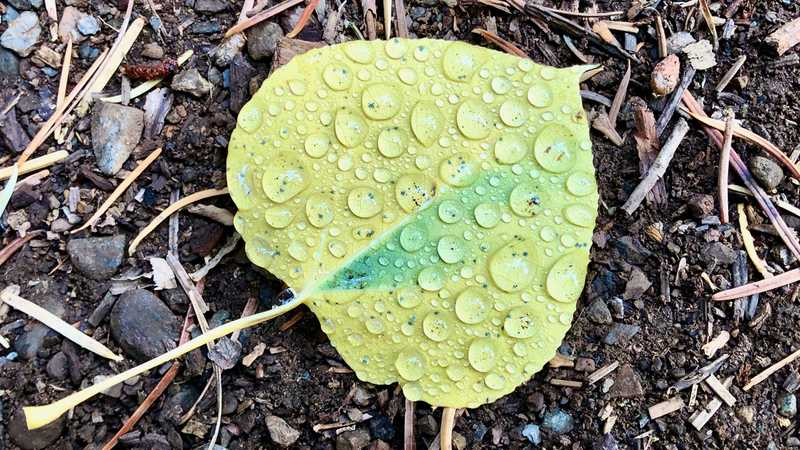 Water beaded on a leaf