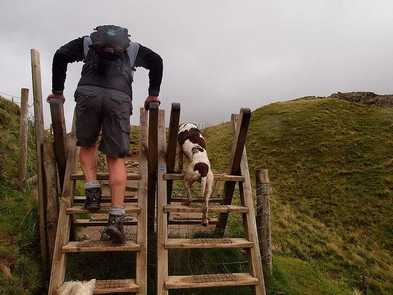 Geocaching: Treasure Hunt with Your Dog