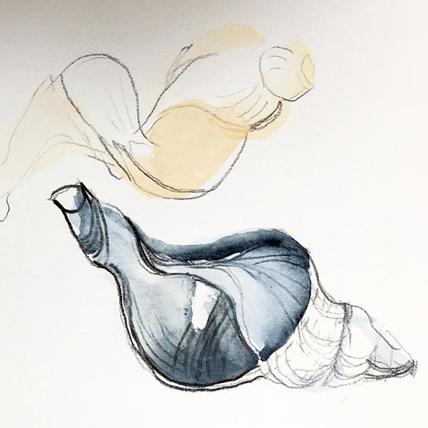 Shells, watercolour