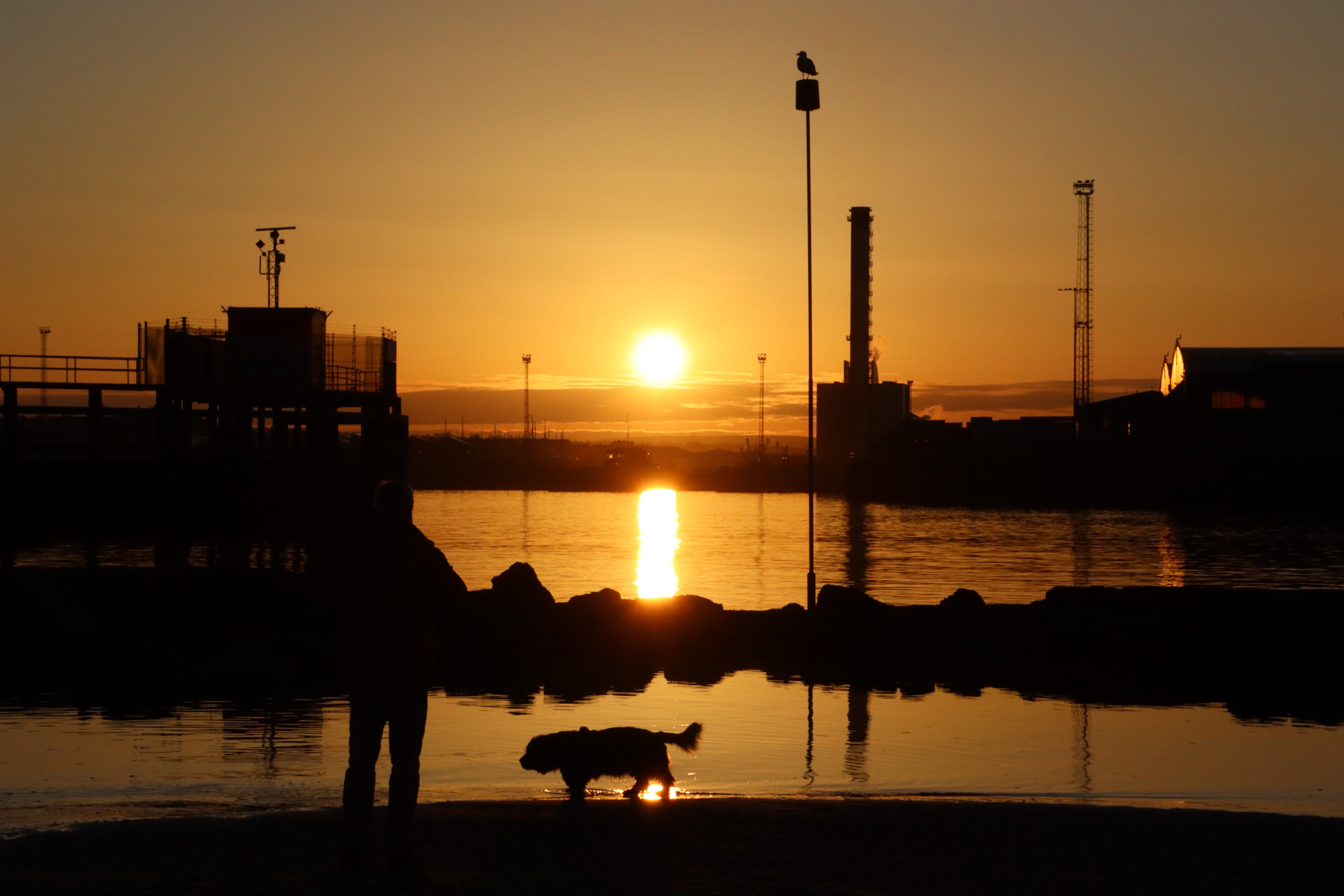 A man and a Sussex spaniel stood at the water's edge watching the sunrise over Shoreham port.