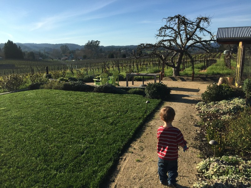 photo of my son in the yard of an AirBnB house in Sebastopol, CA