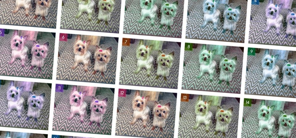 repeated grid of the same dog picture in different colors