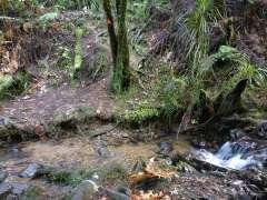 Little stream crossing