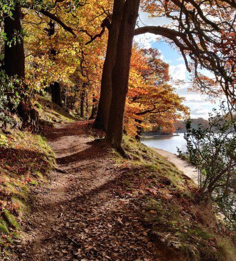 Autumn path through woods at Roundhay Park