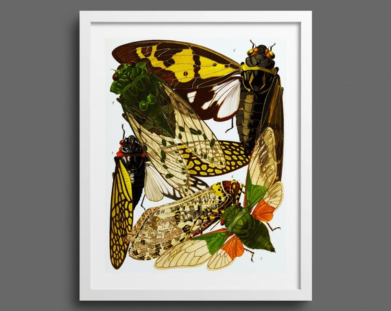Vintage Insect Print by EA Seguy