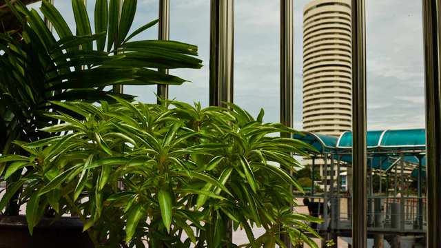 Fumes - Urban green need - photo by ROKMA