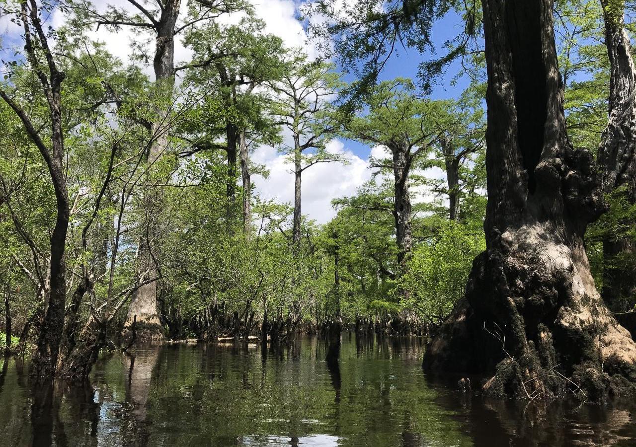 Болото наЧерной реке недалеко отгорода Айвенго, штат Северная Каролина. Фото: WILL MICHAELS / WUNC