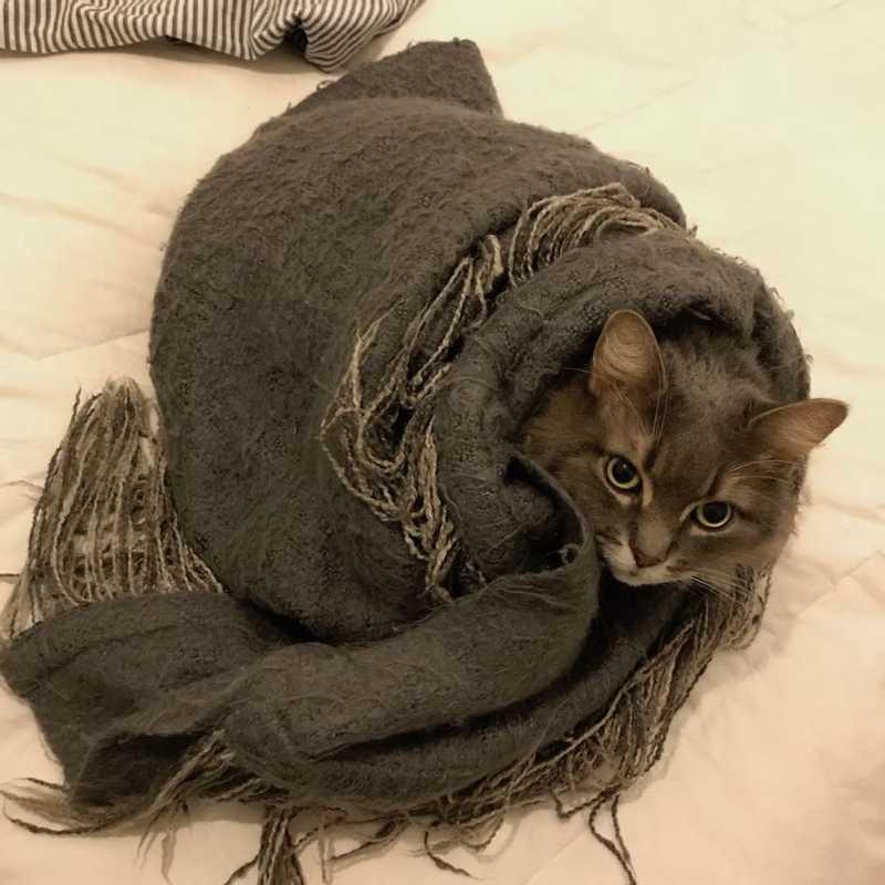 my cat Haku in burrito form