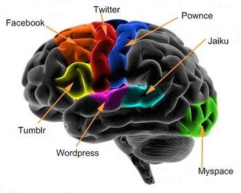 diagramme cerveau réseaux sociaux
