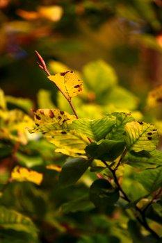 Yellow Green 1690