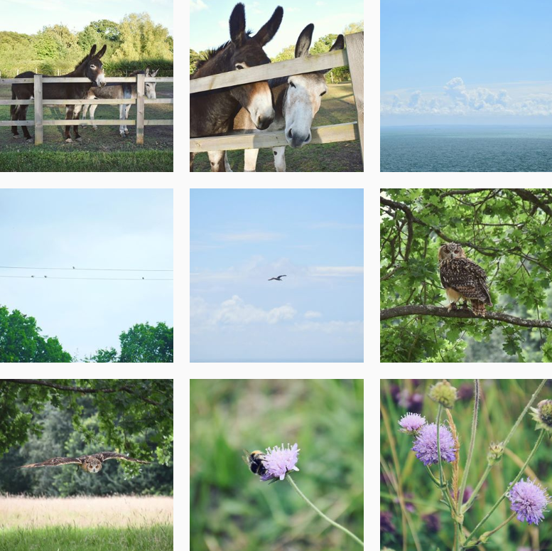 A collection of photos from Kent