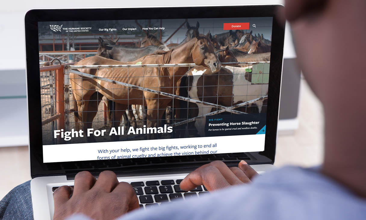 Laptop view of the HSUS website featuring a malnurished horse in a pen