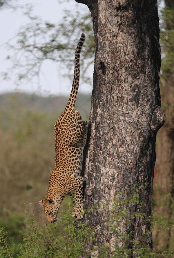 Wildlife - Owain Mcguire