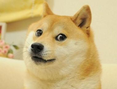 What Kind of Dog Is Doge?