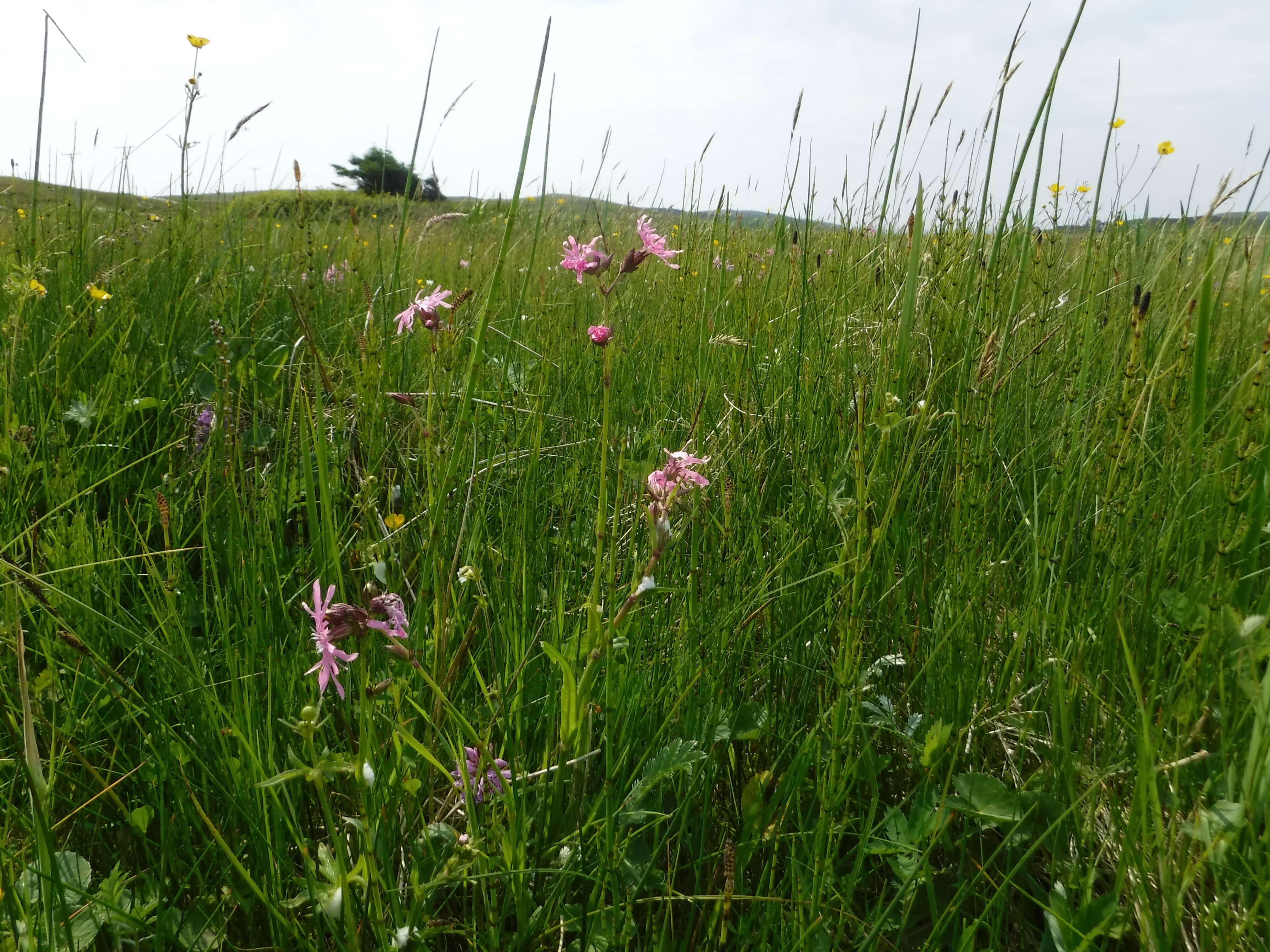 Wetland Northouse