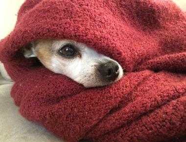 How to Tell If Your Dog Is Too Cold