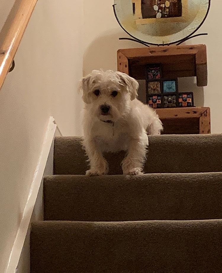 Meet Angus