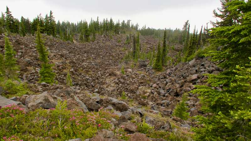 Wildflowers and trees in a lava bed