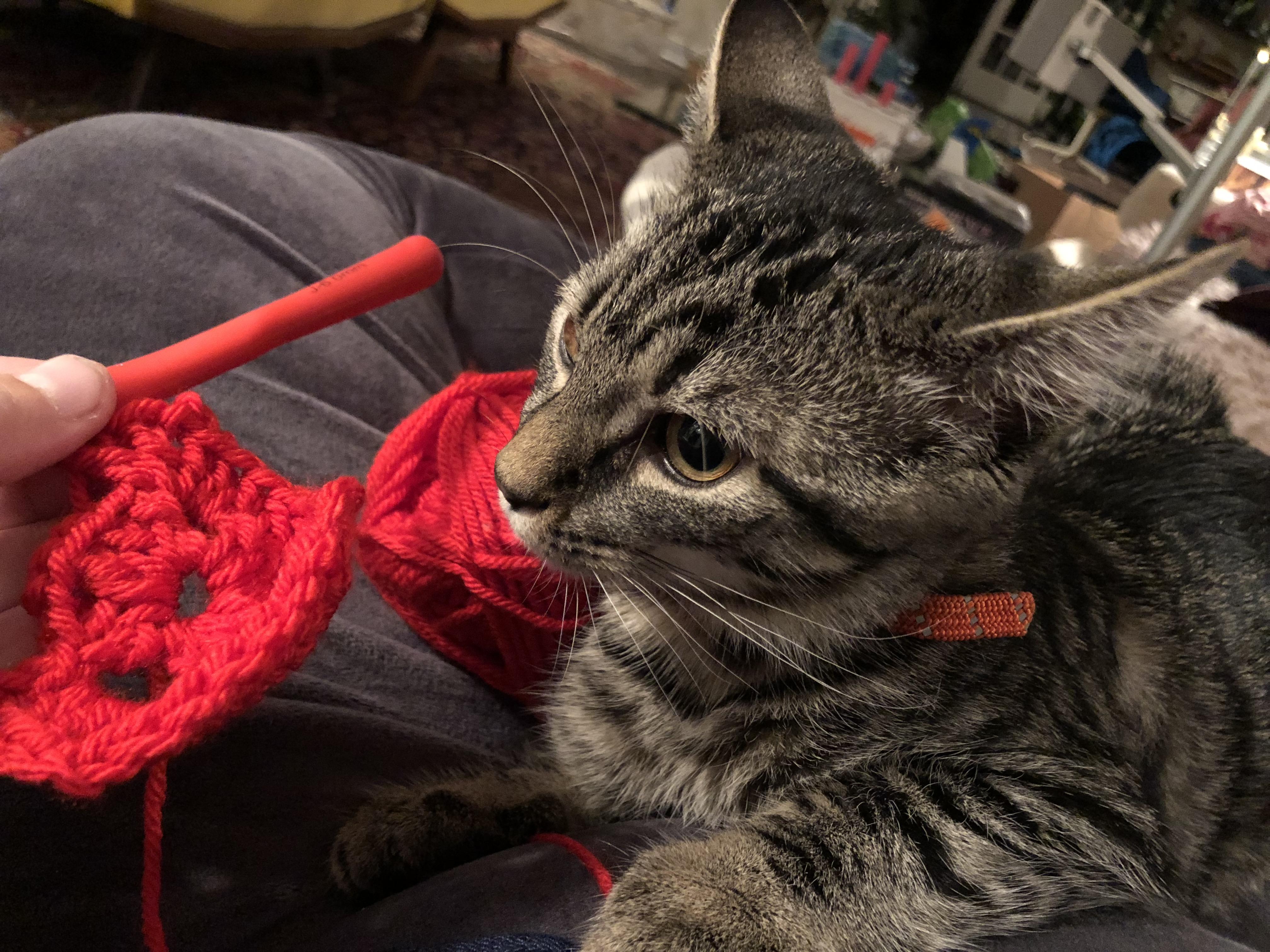 Henry the Kitten