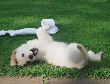 When Do Puppies Calm Down?