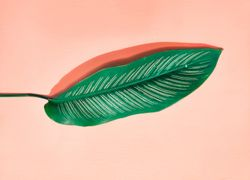 Hojas de laurel: propiedades, usos y beneficios para la salud - Featured image