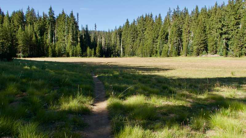 Trail through a meadow