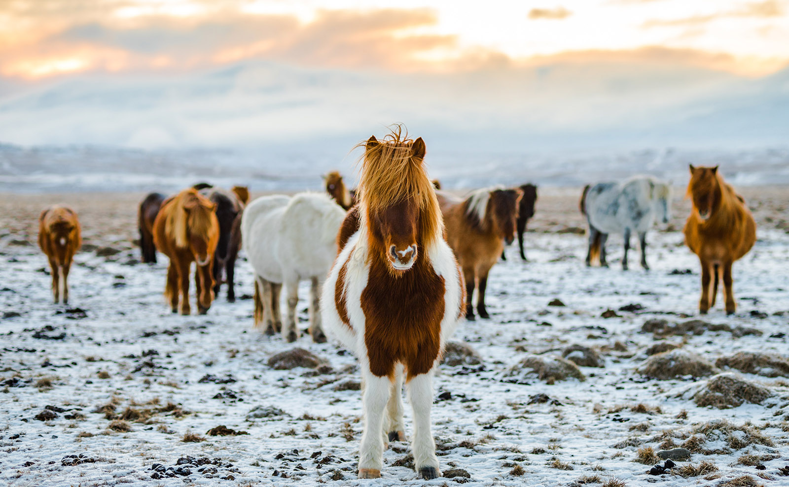 Icelandic Horses, Best Food Books, Literary London, New Scrooge & More: Endnotes 04 December