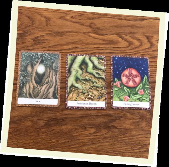 Three card spread from Shony's very nature themed Tarot deck