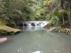 Mokoroa Stream