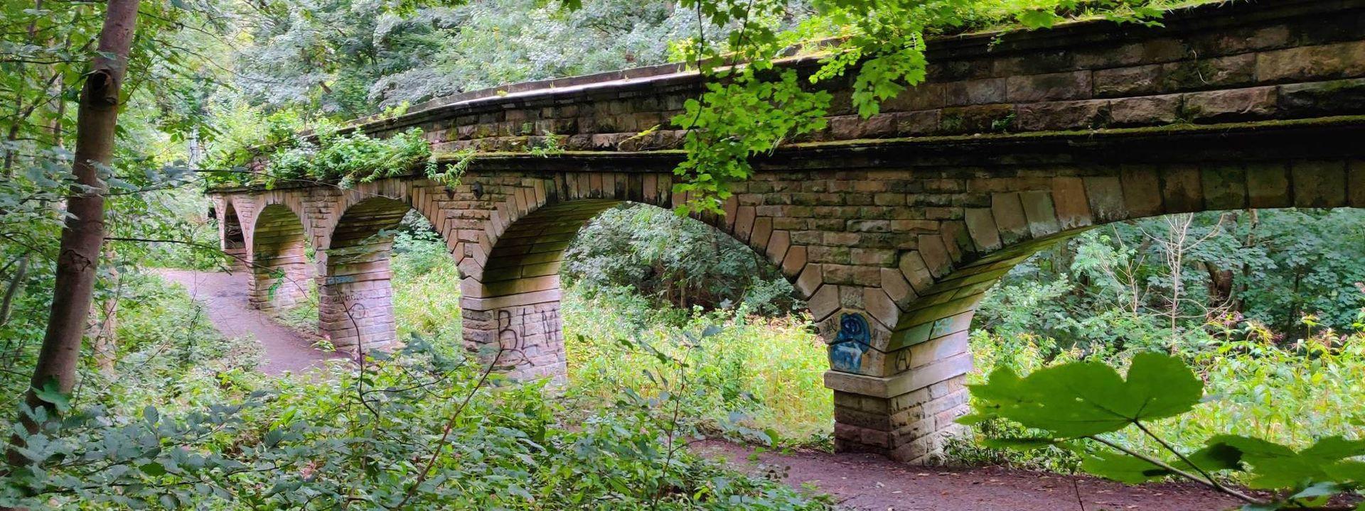 Seven Arches in Scotland Wood