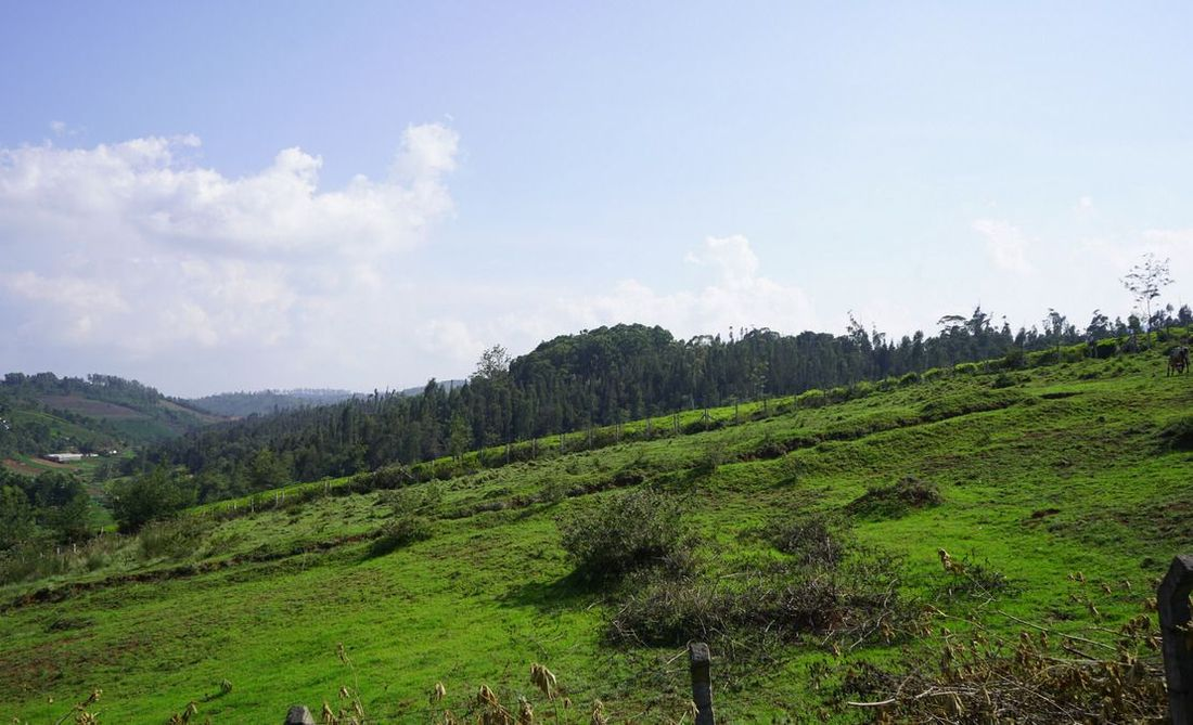 Another view of the plots with the view of a forest in the distance